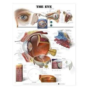 Human Eye Anatomy Chart:  Industrial & Scientific