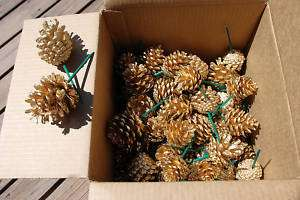 Preserved Flowers:Case(100 pc).Small Pine Cones..Gold..
