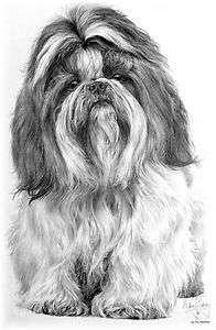 Custom SHIH TZU Pen & Ink Design Dog Breed Sweatshirt Youth to Adult