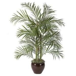 Foliages W 2700   6 Foot Areca Palm Tree   Green: Home & Kitchen