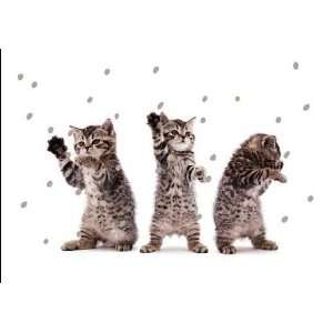 National Geographic Kitten Cheer Christmas Card Health