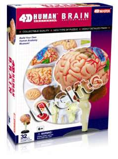 4D Puzzle Brain Human Anatomy Series 3D Model NEW