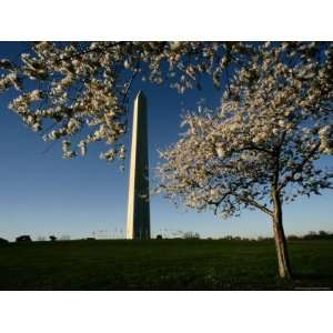 View of the Monument Framed by a Flowering Cherry Tree Photographic